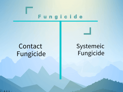 contact fungicide and systemic fungicide