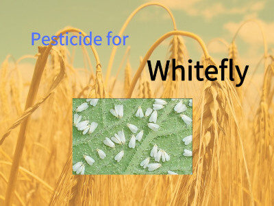 Pesticide for Whitefly